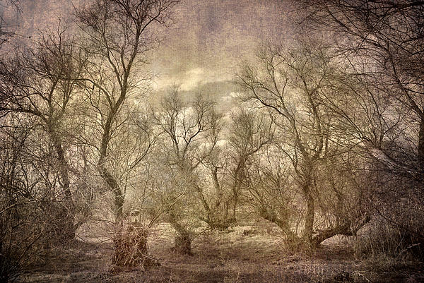 Guido Montanes Castillo - Arms ghost forest