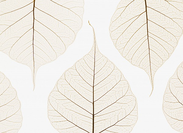 Arranged Leaves Print by Kelly Redinger