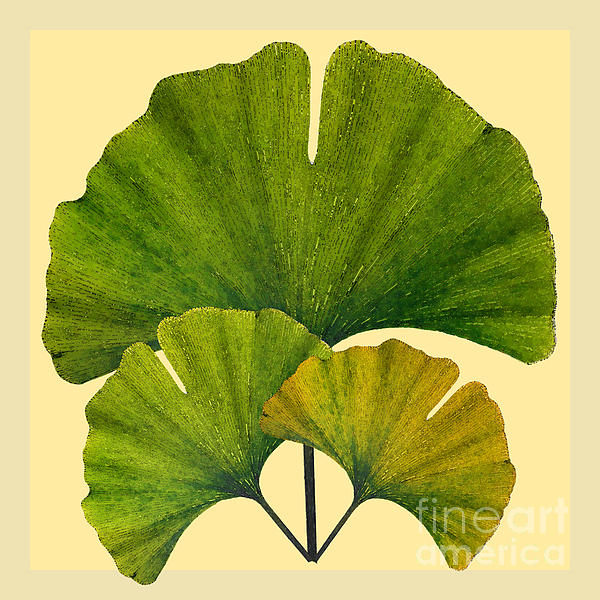 Melissa A Benson - Arts and Crafts Movement Ginko Leaves
