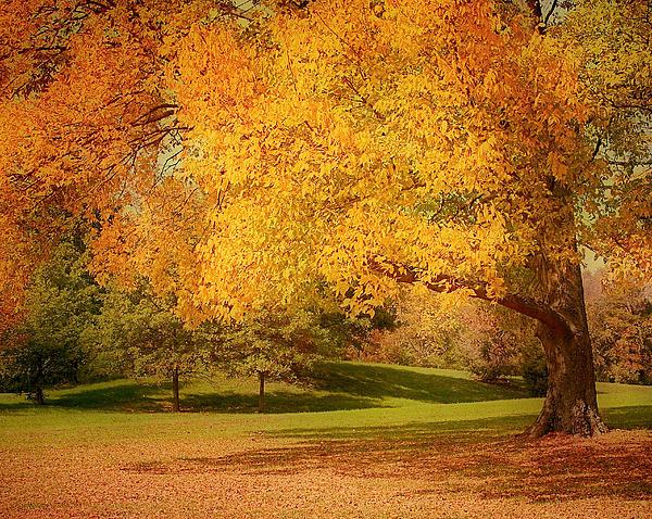As The Leaves Fall Print by Kim Hojnacki