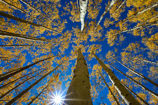 Jeff Clay - Aspen Canopy