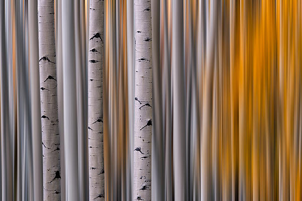 Aspen Gold Abstract Print by Mike Berenson