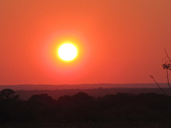 Shawn Hughes - Austin Texas Longhorn Sunset