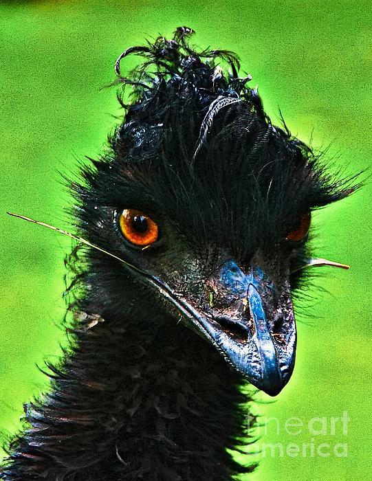 Australian Emu Print by Blair Stuart