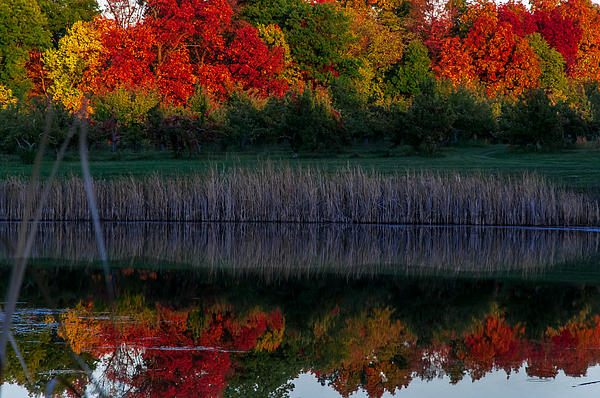 Autum At Orchard Pond Print by Gene Sherrill