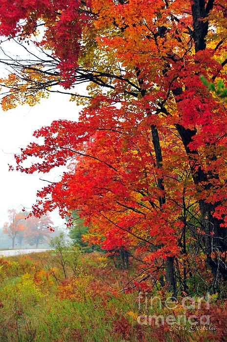 Autumn Along A Country Road Print by Terri Gostola