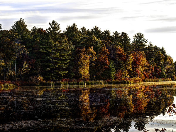 Autumn At It's Finest 2 Print by Thomas Young