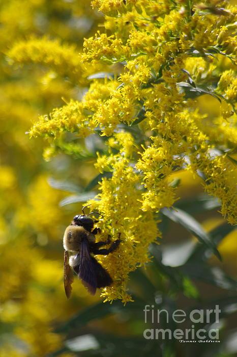 Autumn Bee Print by Tannis  Baldwin