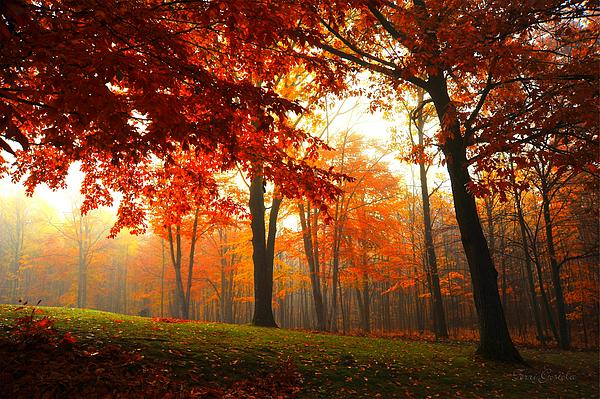 Autumn Canopy Print by Terri Gostola