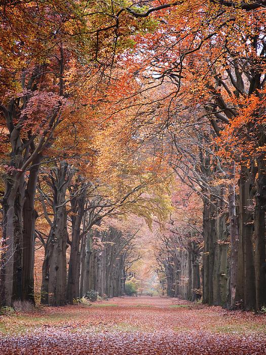 Autumn - Colorful Red Green Orange Nature Landscape Fine Art Photography Print by Artecco Fine Art Photography - Photograph by Nadja Drieling