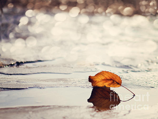 Autumn Print by Diana Kraleva