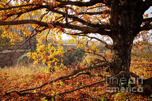 Autumn Etude Print by Igor Baranov