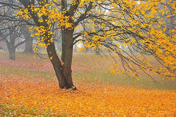 Autumn Fallen Print by Terri Gostola
