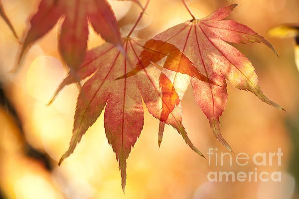 Autumn Glow Print by Anne Gilbert