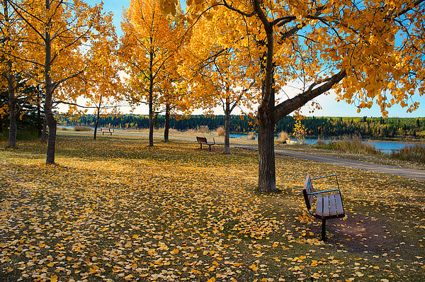 Autumn In Calgary Print by Trever Miller