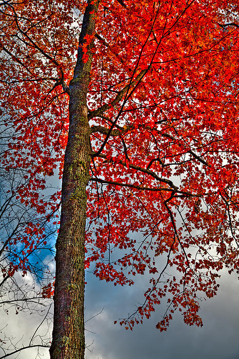Autumn In The Trees Print by David Patterson