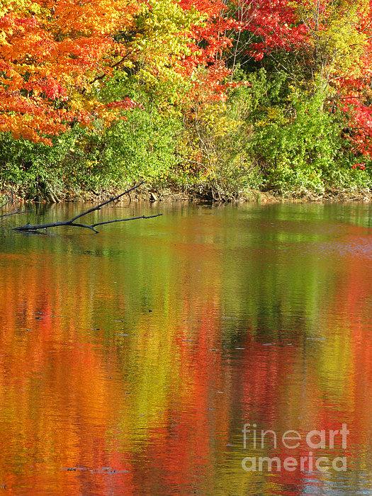Ann Horn - Autumn Iridescence