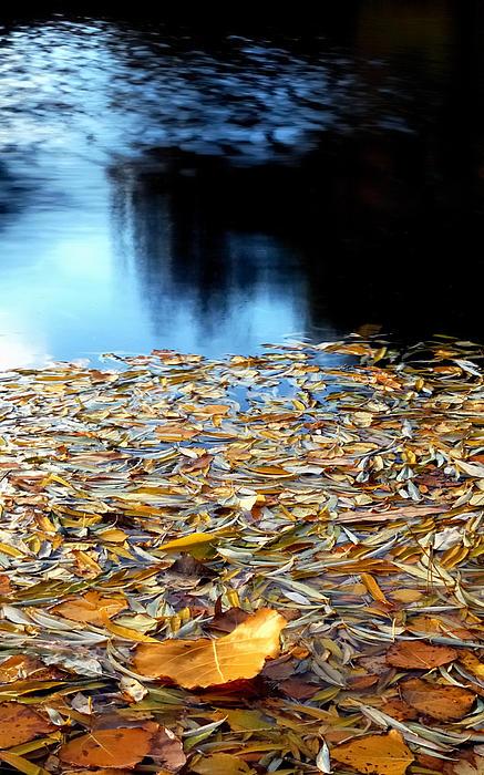 Autumn Lake Print by Steven Milner