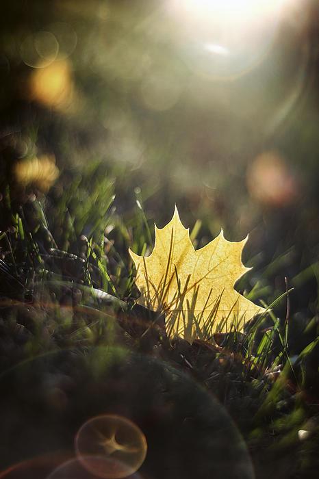 Scott Norris - Autumn Leaf Sunset