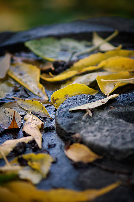 Autumn Leaves on Stone Photograph