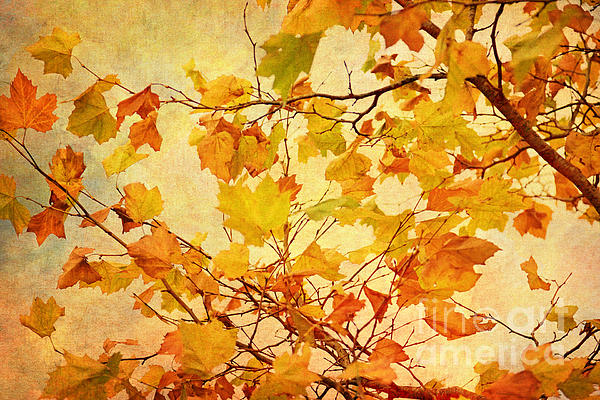 Autumn Leaves With Texture Effect Print by Natalie Kinnear