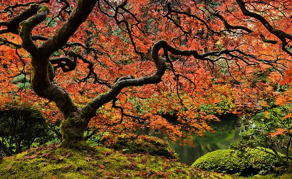 Autumn Magnificence Print by Don Schwartz