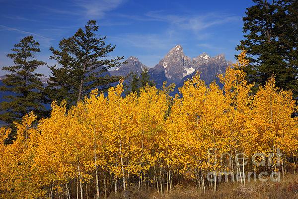 Aaron Whittemore - Peak Color