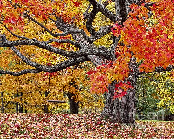 Alan L Graham - Autumn Memories