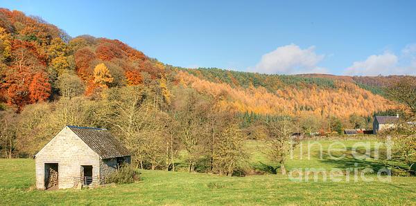 Autumn On The Hillside Print by David Birchall