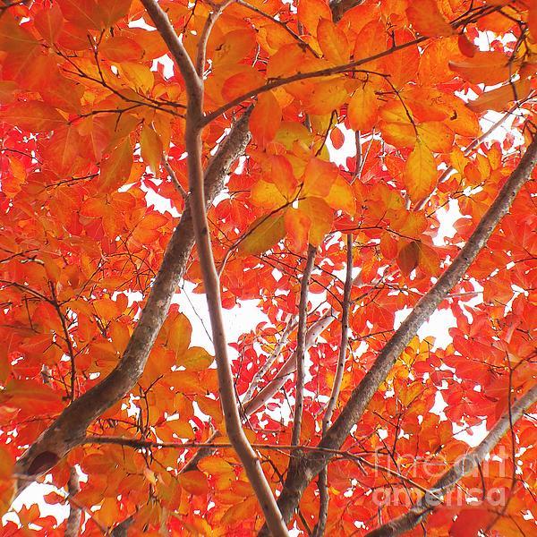 Autumn Orange Print by Scott Cameron