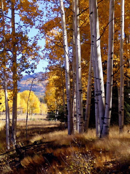 Autumn Paint Chama New Mexico Print by Kurt Van Wagner