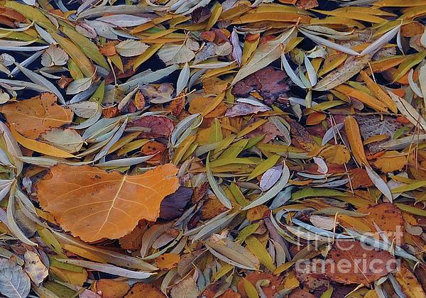 Steven Milner - Autumn Palette