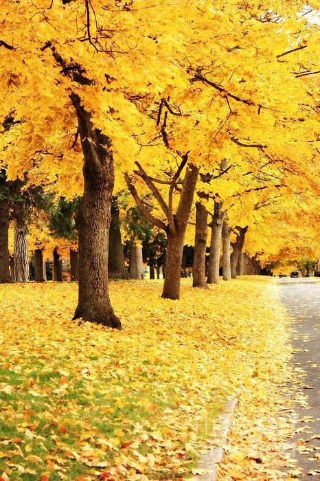 Carol Groenen - Autumn Perspective