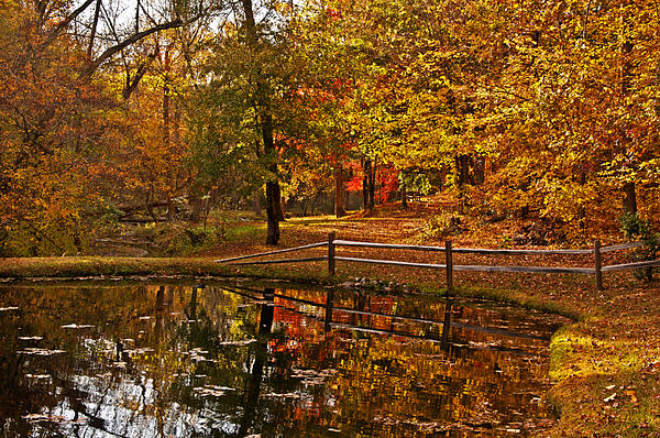 Michael Whitaker - Autumn Reflection on Whitaker Manor Pond