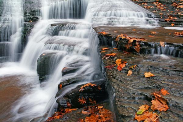 Autumn Rush Print by David Simons