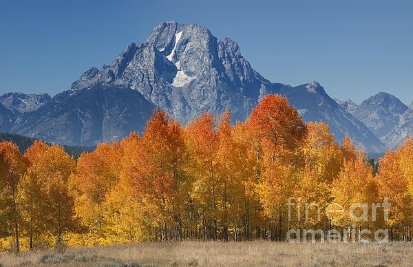 Autumn Splendor In Grand Teton Print by Sandra Bronstein