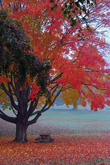Autumn Splendor Print by Lisa  Phillips