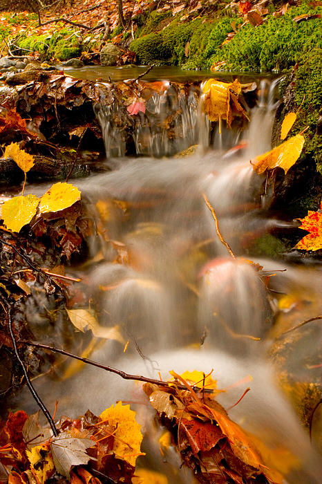 Autumn Stream 8227 Print by Brent L Ander