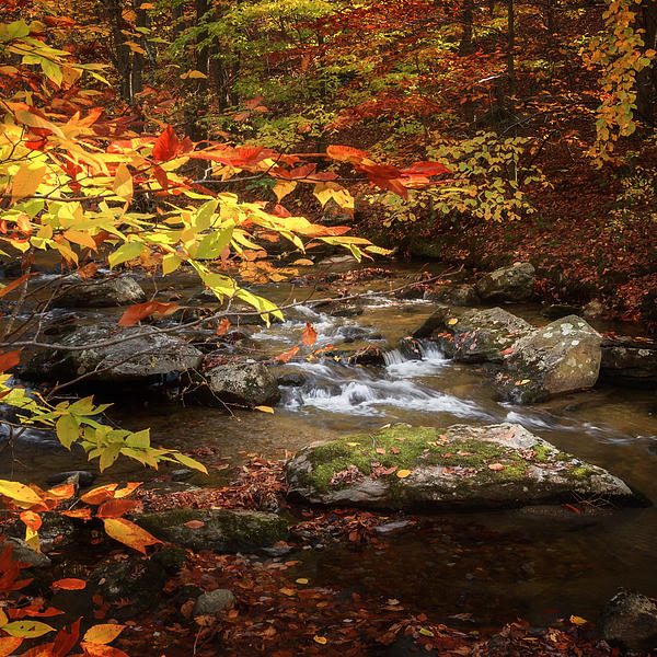Autumn Stream Square Print by Bill  Wakeley