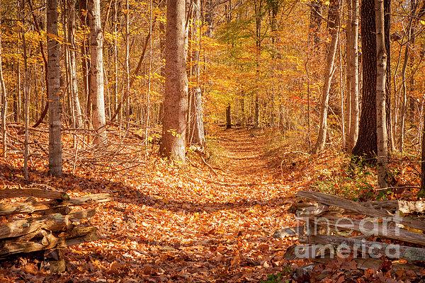 Autumn Trail Print by Brian Jannsen