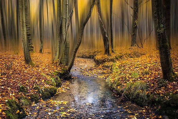Autumn Woodland Print by Ian Hufton