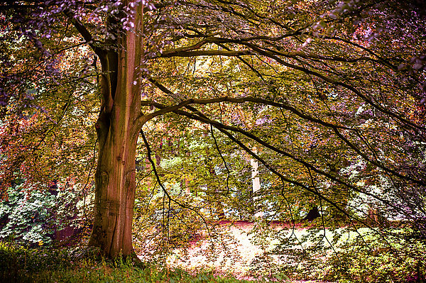 Autumnal Colors In The Summer Time. De Haar Castle Park Print by Jenny Rainbow