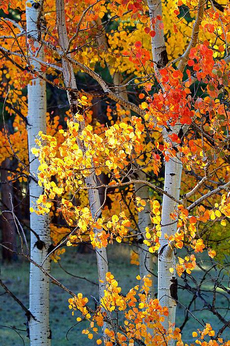 Autumn's Fire Print by Jim Garrison