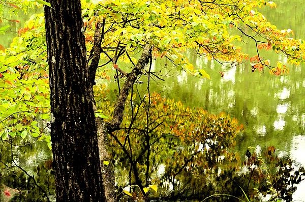Autumn's First Reflections II Print by Maria Urso
