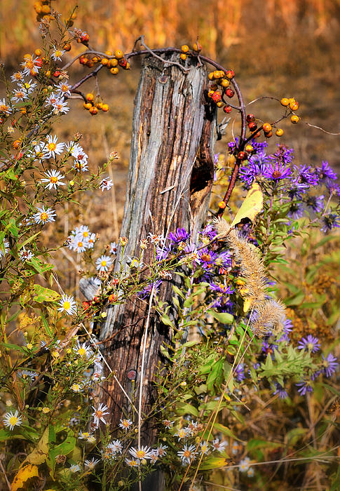 Autumns Flowers Print by Thomas Schoeller