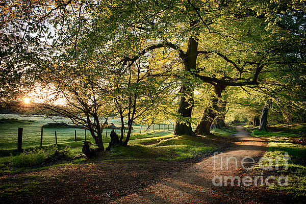 Avenue Of Light Print by Tim Gainey
