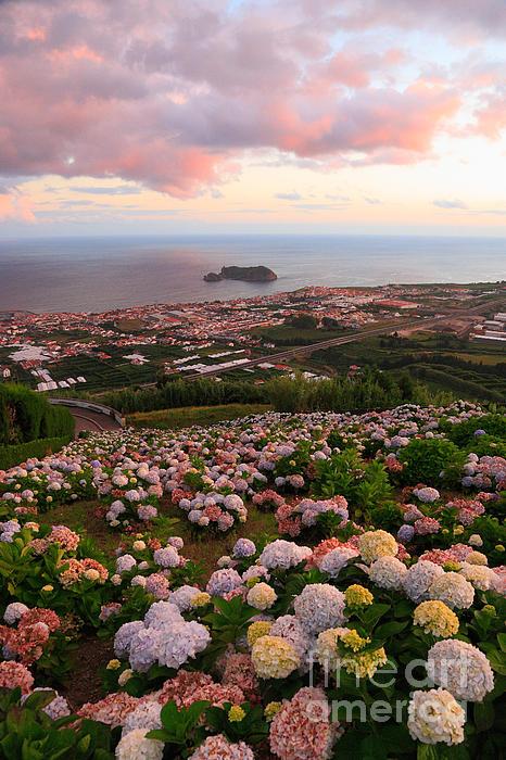 Azorean Town At Sunset Print by Gaspar Avila