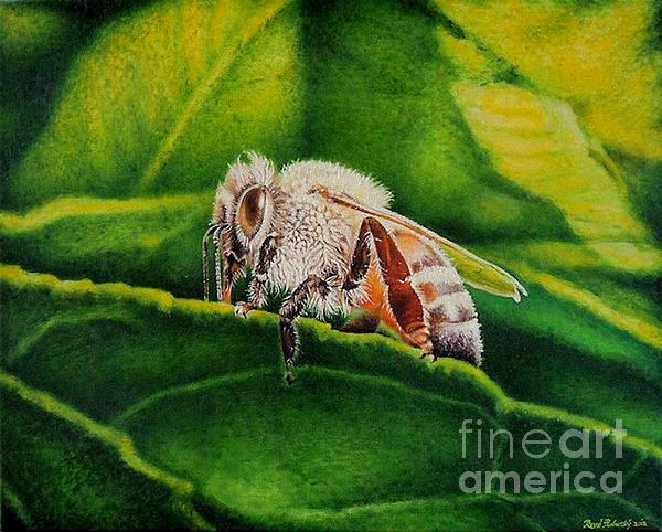 Baby Bee Print by Rene Holovsky