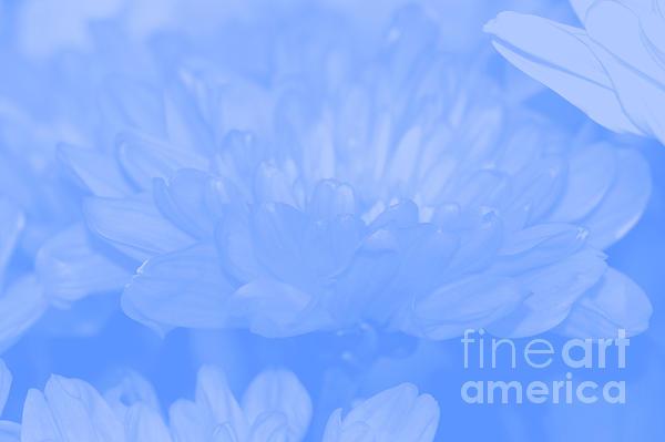 Baby Blue 1 Print by Carol Lynch