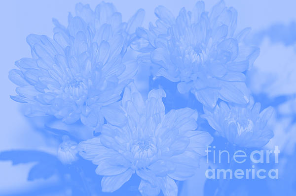 Baby Blue 2 Print by Carol Lynch